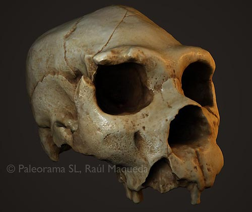 Atapuerca digital cráneo5 paleorama arqueología virtual